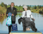 Judge Huston Clark awarded CH Stirling O'Hanluan RESERVE BEST IN SHOW at the Tanana Valley Kennel Club All-Breed Dog Show in Fairbanks, Alaska on May 24, 2015.