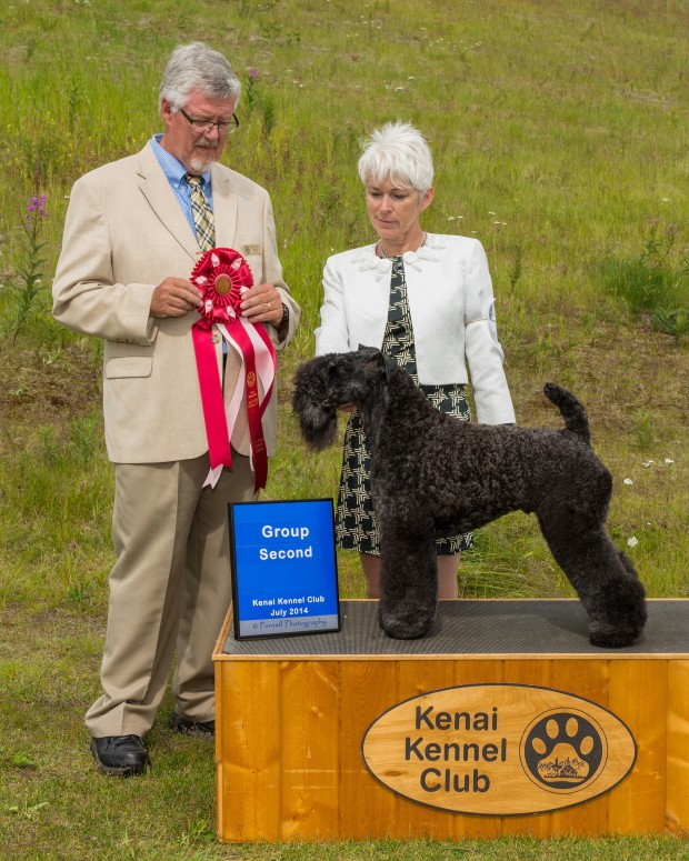 Judge Michael J Woods awarded Stirling O'Hanluan Terrier Group 2 at the Kenai Kennel Club All-Breed Dog Show in Soldotna, Alaska on July 11, 2014