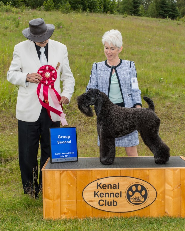 Judge F.M. (Butch) MacDonald awarded Stirling O'Hanluan Terrier Group 2 at the Kenai Kennel Club All-Breed Dog Show in Soldotna, Alaska on July 12, 2014