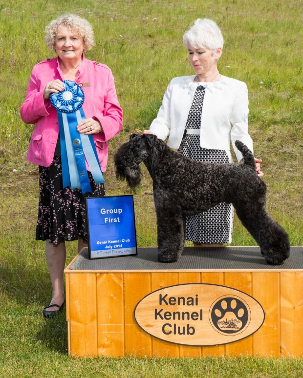 Judge Cecilia Ringstrom awarded Stirling O'Hanluan his very first Terrier Group 1 at the Kenai Kennel Club All-Breed Dog Show in Soldotna, Alaska on July 13, 2014!!!