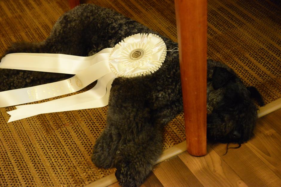 Stirling O'Hanluan is Dog Tired...