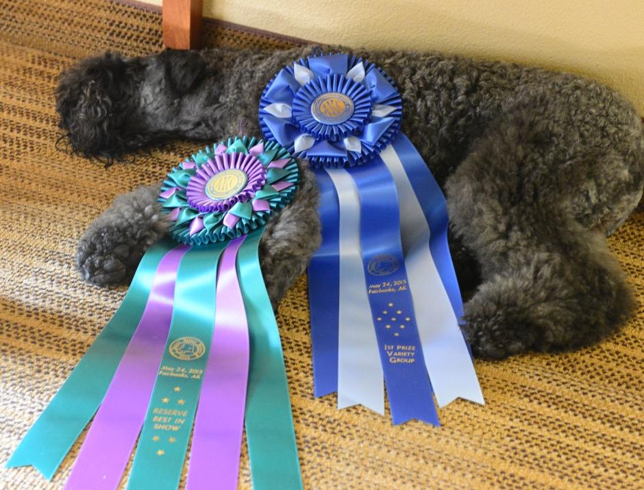 Terrier GRP 1 & RBIS