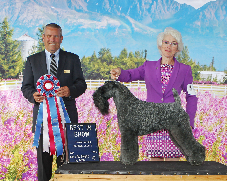 Judge Dana P Cline awarded CH Stirling O'Hanluan BEST IN SHOW at the Cook Inlet Kennel Club All-Breed Dog Show in Palmer, Alaska on July 25, 2015