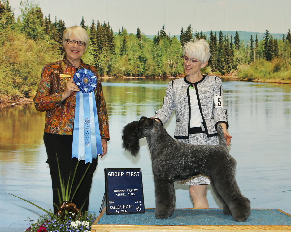 Judge Chris A Levy awarded CH Stirling O'Hanluan a TERRIER GROUP 1 at the Tanana Valley Kennel Club All-Breed Dog Show in Fairbanks, Alaska on May 28, 2016