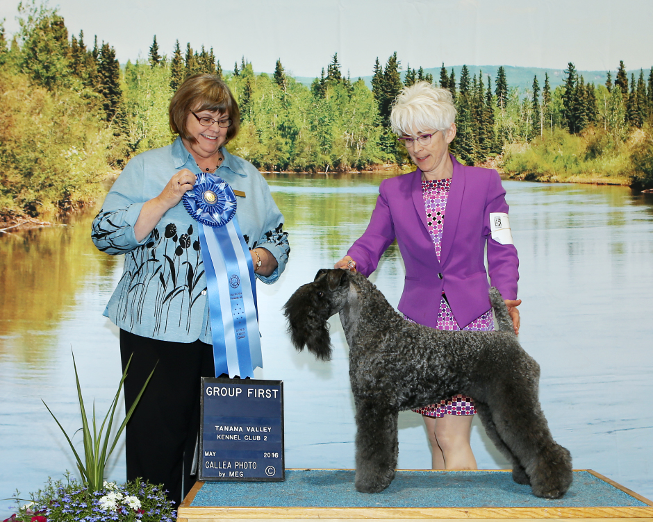Judge Janie M Bousek awarded CH Stirling O'Hanluan the Terrier Group 1 at the Tanana Valley Kennel Club All-Breed Dog Show in Fairbanks, Alaska on May 29, 2016