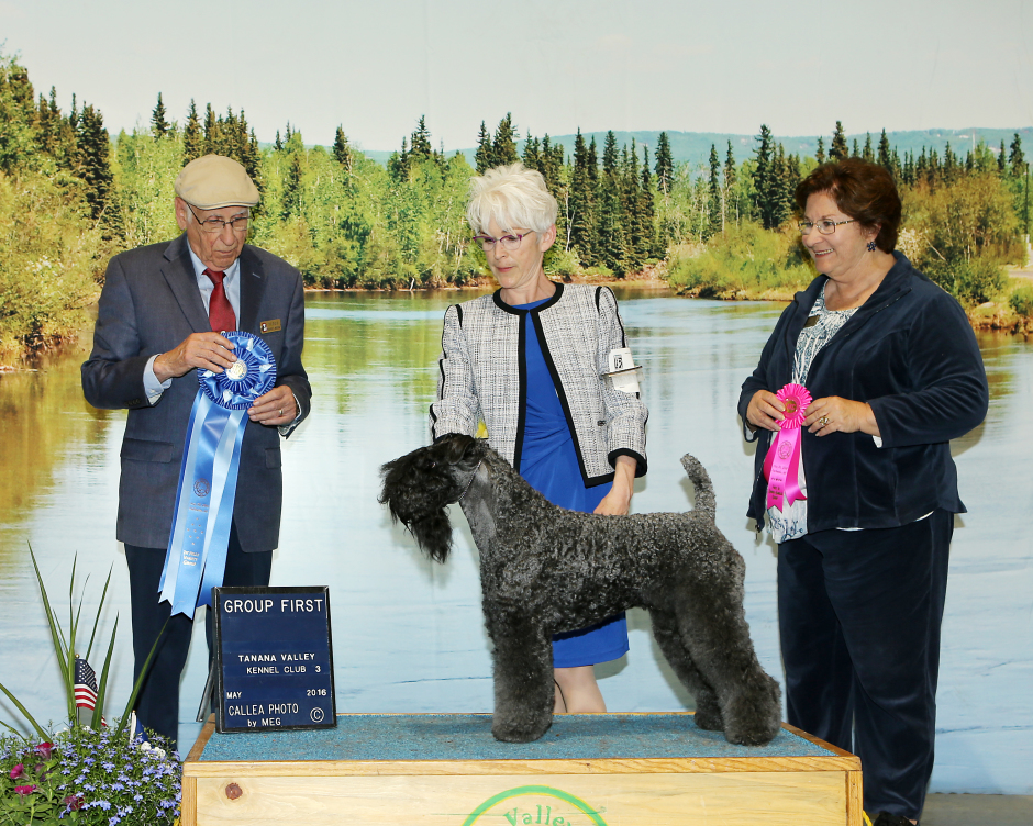 Judge Wayne E Bousek awarded the TERRIER GROUP 1 and Judge Nikki Riggsbee awarded the NOHS TERRIER GROUP 1 to CH Stirling O'Hanluan at the Tanana Valley Kennel Club All-Breed Dog Show in Fairbanks, Alaska on May 30, 2016
