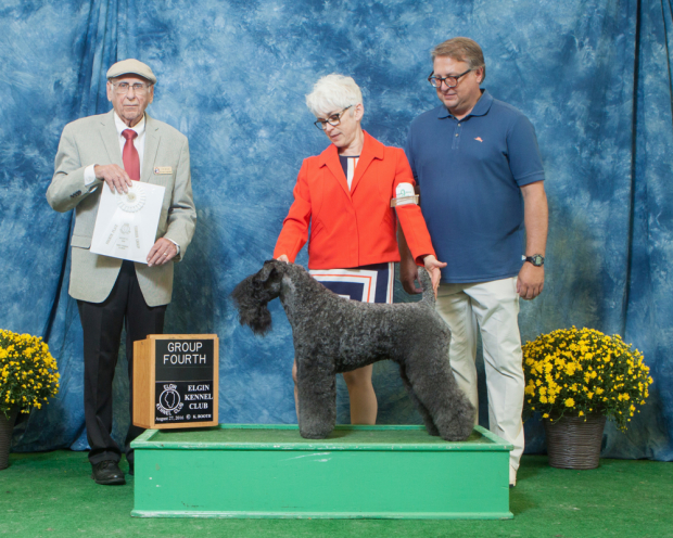 Judge Wayne Bousek awarded GCH Stirling O'Hanluan the TERRIER GROUP 4 at the Elgin Kennel Club All-Breed Dog Show in St. Charles, Illinois on August 28, 2016.